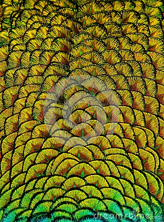 Free Geometric Patterns And Design In Colorful Peacock Feathers Royalty Free Stock Image - 118589616