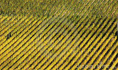 Geometrical vineyard