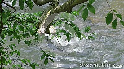 Georgië, Grote Kreek die, Water over een rots in Grote Kreek stromen zoals die door bladeren en een lidmaat wordt gezien stock videobeelden