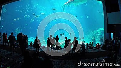 Georgia Aquarium. GEORGIA - JULY 25: Stock video of the Deepsea exploration tank at the Georgia Aquarium which is the largest aquarium in the US