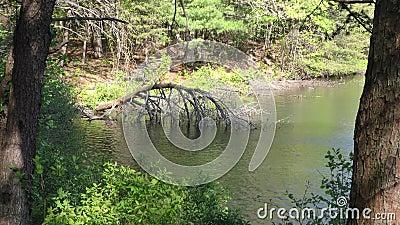 Georgia Fort Mountain Un arbre mort penché sur le lac Fort Mountain banque de vidéos