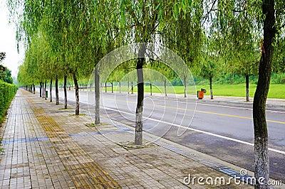 Gerade Straße mit Bäumen