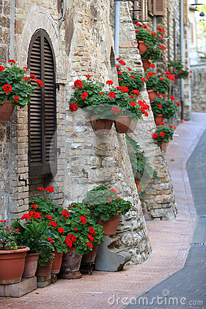 Free Geranium Flowers In Streets Of Assisi, Umbria Stock Photography - 26826192