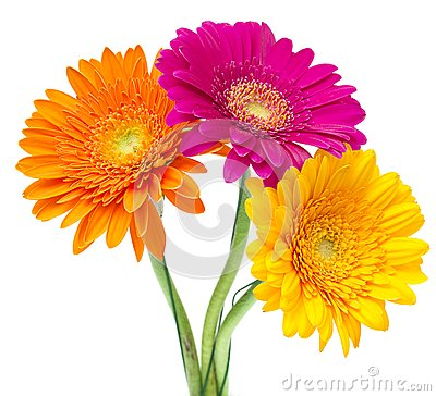 Half Daisy Stock Photos, Images, & Pictures - 547 Images