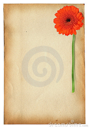Gerbera against old paper
