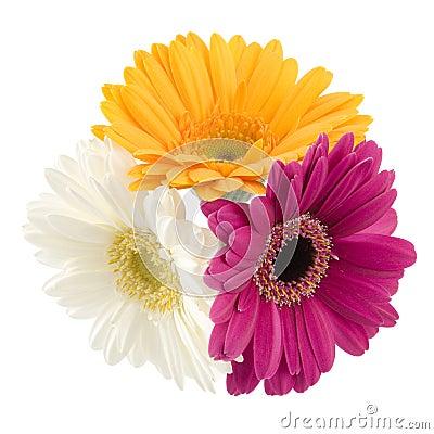 Free Gerbera Bouquet Stock Images - 8304114