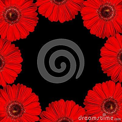 Bright red gerbera flowers as border on black back