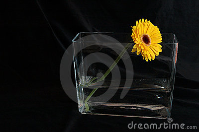 Gerbera, with compliments Stock Photo