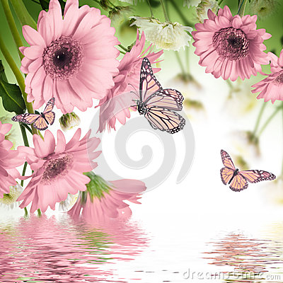 Free Gerbera Daisies And Butterfly Stock Images - 34536774