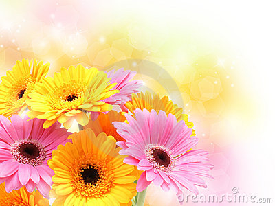 Gerbera daisies on pastel sparkly background