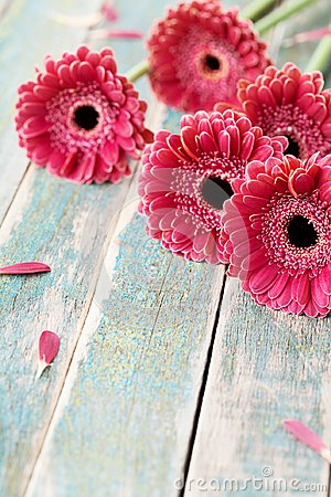 Free Gerbera Daisy Bouquet For Mother Or Womans Day. Beautiful Flower Background. Vintage Style. Royalty Free Stock Photos - 108616998