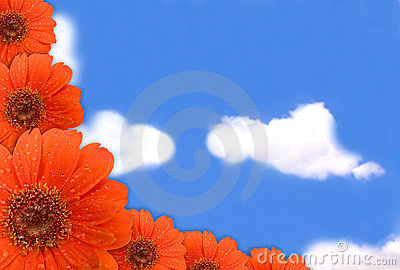 Gerbera flower on blue sky