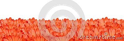 Gerbera flower frame