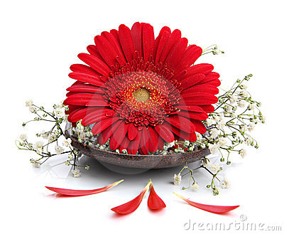 Gerbera flower on spa spoon