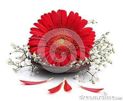 Gerbera flower on spa spoon