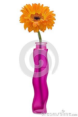Gerbera flower in a vase