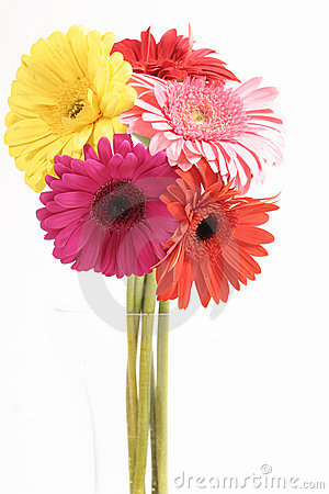Free Gerberas In Vase Royalty Free Stock Images - 209699