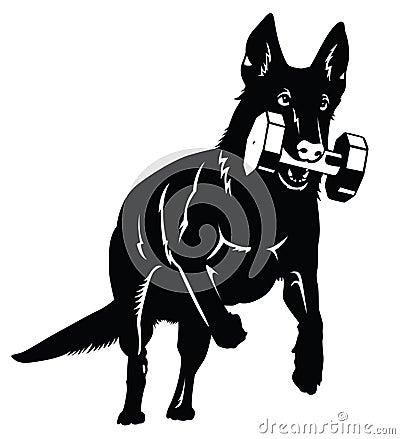 Free German Shepherd Stock Photos - 66244623