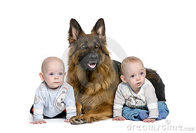 German shepherd dog with 2 twins boy