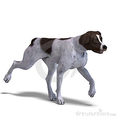 German Short Hair Dog. 3D rendering with clipping