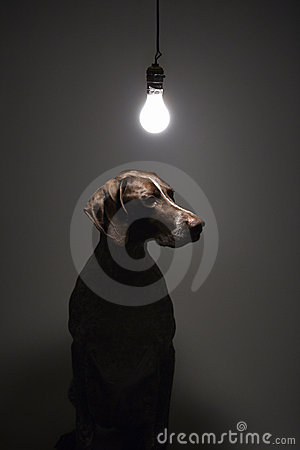 Free German Shorthaired Pointer. Stock Photography - 2044582