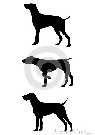 Free German Shorthaired Pointer Dog Vector Royalty Free Stock Photo - 32270445