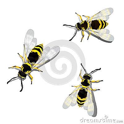 German wasps