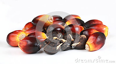 Germinated seeds and Oil Palm seeds