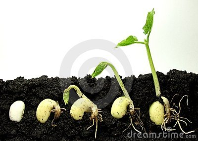 Germinating plant