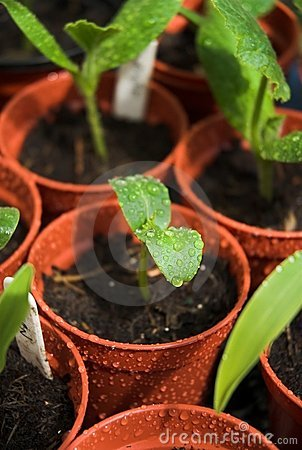Germinating Plants