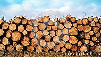 Gesägt herauf Baum