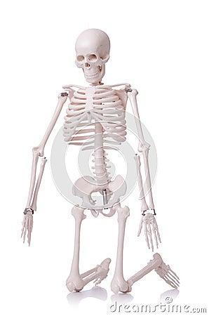 Geïsoleerdp skelet