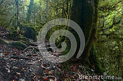 Gespenstischer moosiger Wald Halloweens