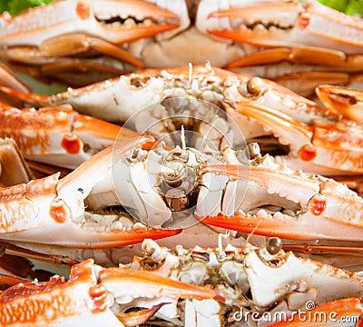 Gestoomde krab