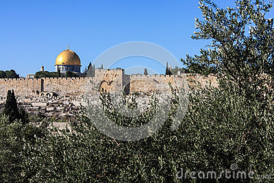 Gethsemane olive trees and the walls of Jerusalem