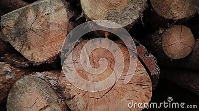 Gevlekte Logboeken die op een Boomstam in de Bosbouw die boomstammen vielen die in een hoop worden geveld De gekapte bomen vallen stock footage