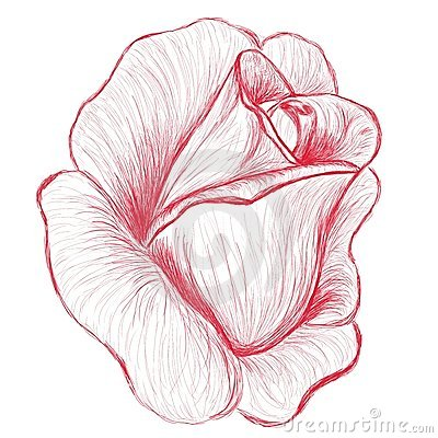 gezeichnete abbildung der knospe des rotes rosafarbene hand stockbilder bild 19574264. Black Bedroom Furniture Sets. Home Design Ideas