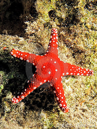 Gghardaqa sea star