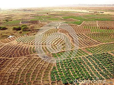 Ghana fields - african rural landscape