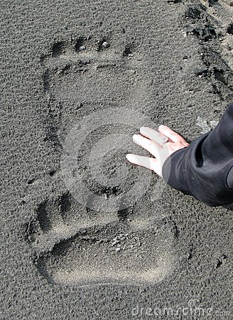 Free Giant Brown Bear Tracks Stock Images - 44892114