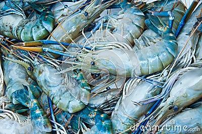 Giant freshwater prawn