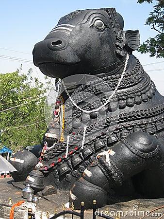 Giant Nandi