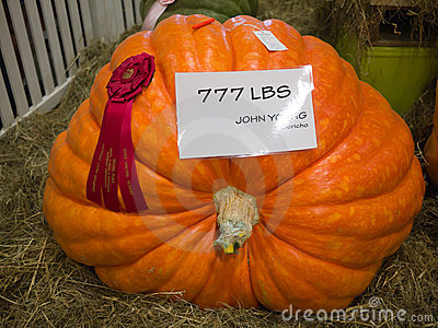 Giant Pumpkin Editorial Image