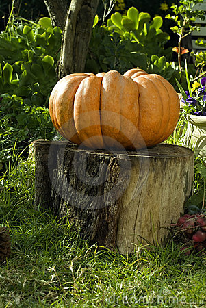 Giant Pumpkin on Stump