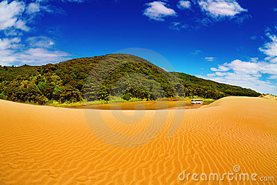 Giant sand dunes and forest