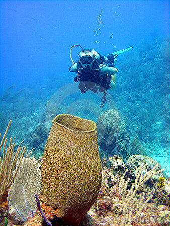 Giant sponge and diver