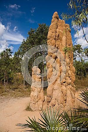 Free Giant Termite Mound Stock Photography - 2910122