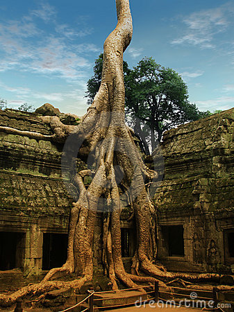 Free Giant Trees Covering The Old Temples Of Angkor Wat Royalty Free Stock Photo - 13314445
