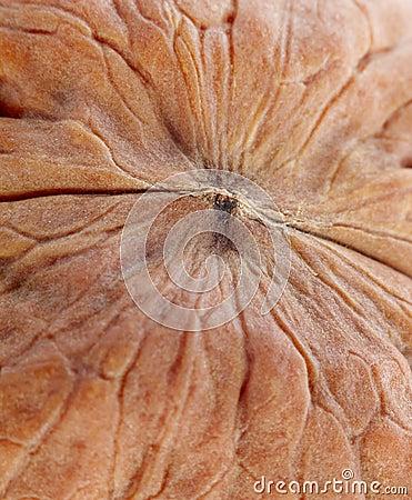 Giant walnut macro