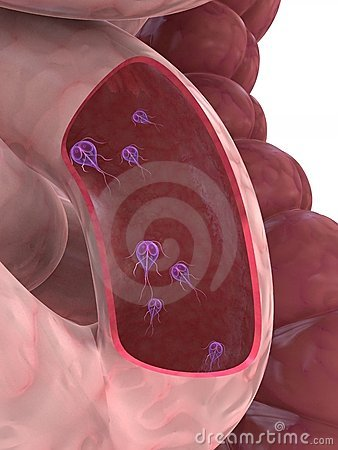 Free Giardia Parasite Royalty Free Stock Image - 5604826